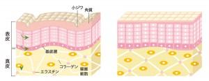 繊維が細胞